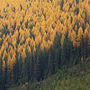 October 24 - Larch Madness...<br /> <br /> #365PictureToday - Delightful