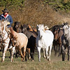 October 21 -  Thundering herd...<br /> <br /> #365PictureToday - Gather/Wildlife<br /> Western Pleasure Guest Ranch<br /> Sandpoint, ID<br /> Selkirk Ridge Western Photography Workshop
