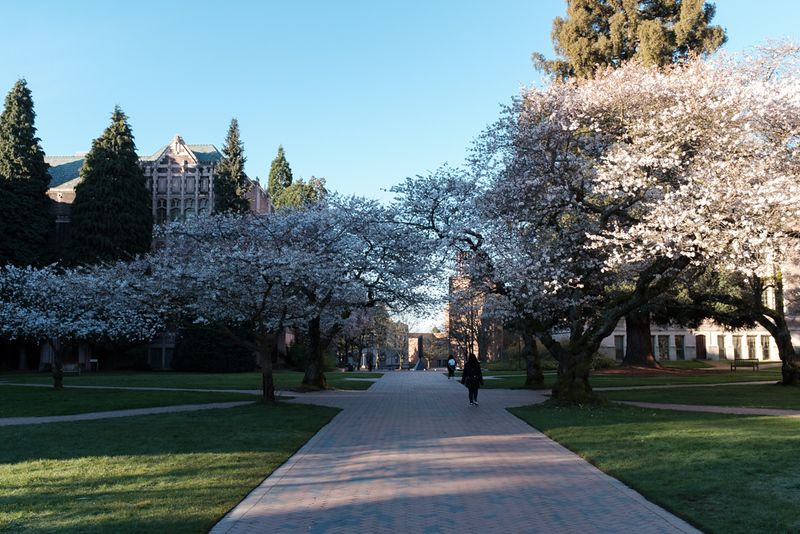 10 Mar: University of Washington. The cherry blossoms are just starting to come out.