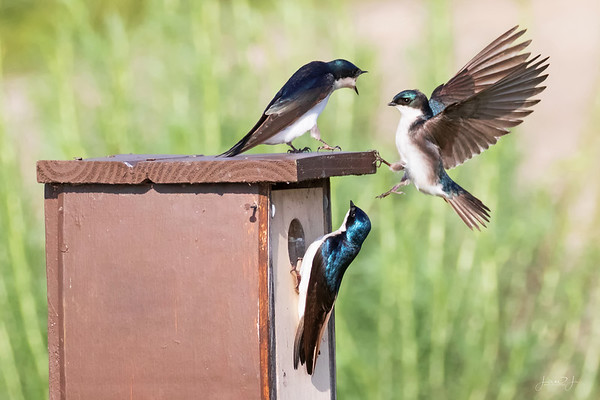 March 5 - No Soliciting!!!<br /> <br /> San Joaquin Wildlife Refuge