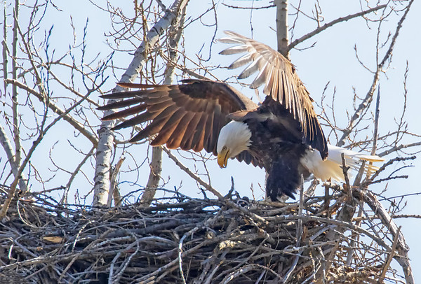 April 8 - I looked and looked for a little beak...but I couldn't see one yet.<br /> <br /> #365PictureToday - All is Ours Day
