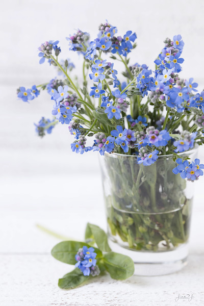 May 5 - Forget-Me-Not...