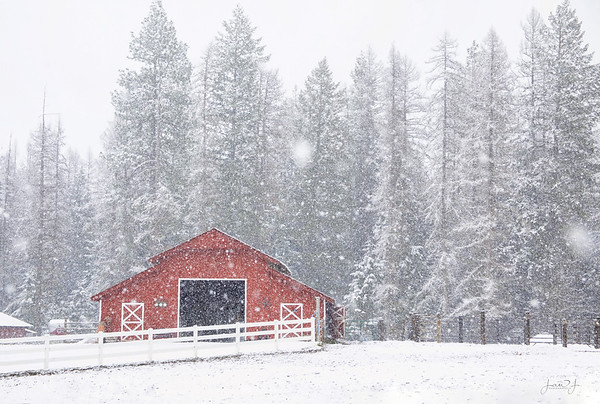 March 25 - Just another beautiful spring day in North Idaho...  #365PictureToday - Lobster/Red Day Sagle, ID
