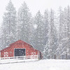 March 25 - Just another beautiful spring day in North Idaho...<br /> <br /> #365PictureToday - Lobster/Red Day<br /> Sagle, ID