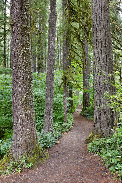 August 6 - It's been a wonderful day...<br /> <br /> Silver Falls State Park<br /> Silverton, OR