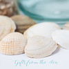 June 20 - Not North Idaho shells...<br /> <br /> #365PictureToday - Sea Shell Day