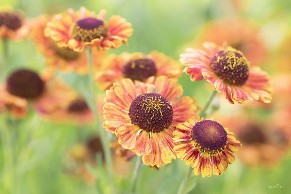 October 4 - Is there such a thing as Fall Flowers???