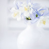 May 8 - With a hint of blue...<br /> <br /> #365PictureToday - White on White
