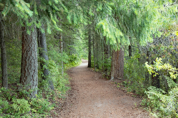 August 16 - What is it about a path?