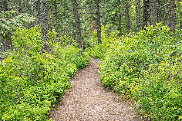 May 27 - A walk in the woods...<br /> <br /> #365PictureToday - Health & Fitness Day