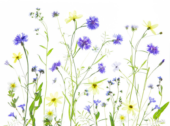 September 8 - The wildflowers just keep popping up...