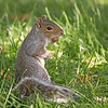October 22 - Squirrelin' away...