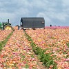 March 11 - The California photos will be sneaking in from time to time...<br /> <br /> #365PictureToday - Tool Day<br /> The Flower Fields<br /> Carlsbad, CA
