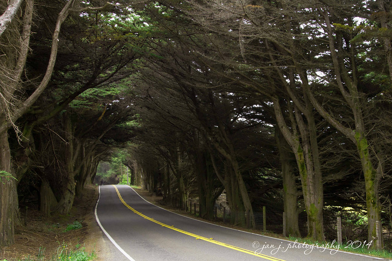 June 6 - Tunnel of Trees on Hwy 1 along the Mendocino Coast