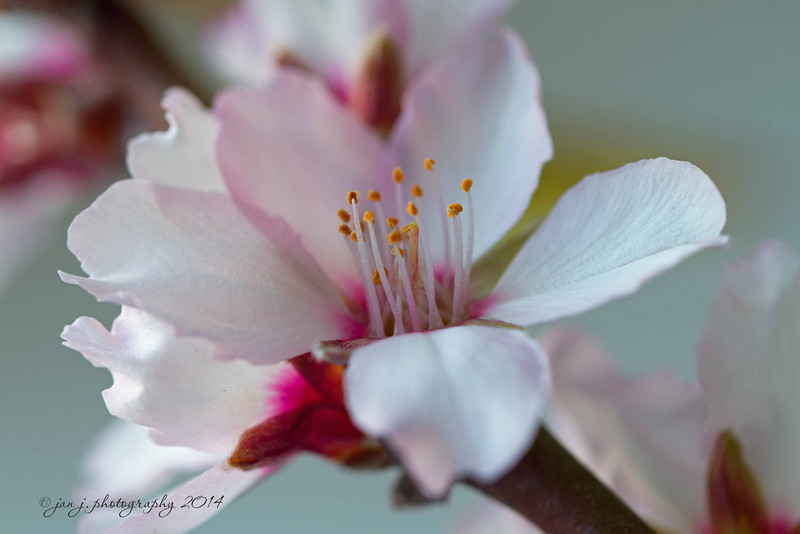 February 2 - B is for Blossom