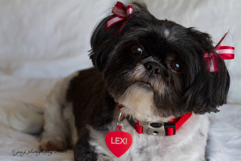 February 12 - L is for Lexi