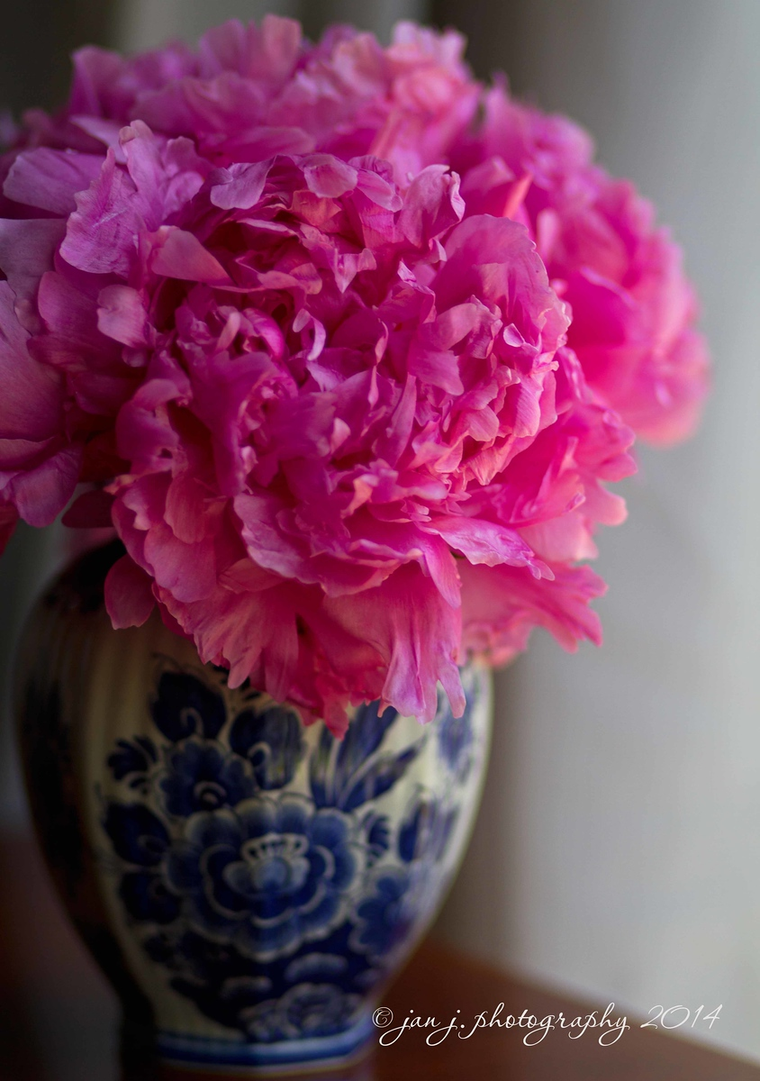 June 9 - More Peonies