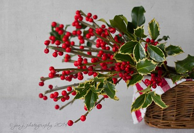 December 16 - The holly and the ivy...