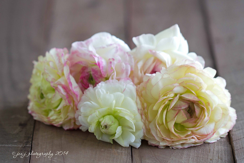 February 18 - R is for Ranunculus