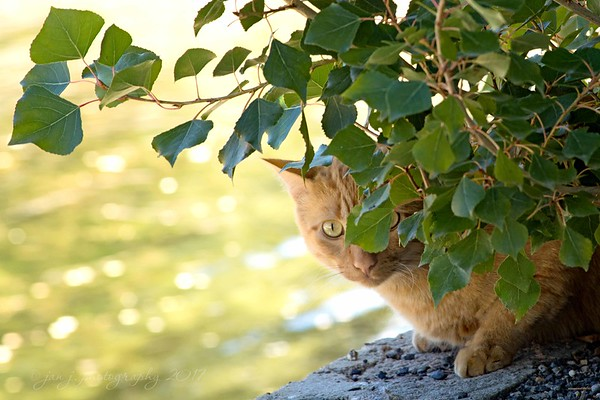 October 10 - My very first cat image (well, except for lions and tigers). I'm thankful she posed for me before she darted off.<br /> <br /> #CY365 - Straggler/Dawdler