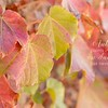 October 21 - I'm thankful to see signs of Fall in my own neck of the woods...<br /> <br /> #CY365 - Predict