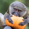 October 14 - I'm thankful for Pumpkins...but I prefer mine in a pie!<br /> <br /> #CY365 - Unexpected<br /> San Diego Zoo