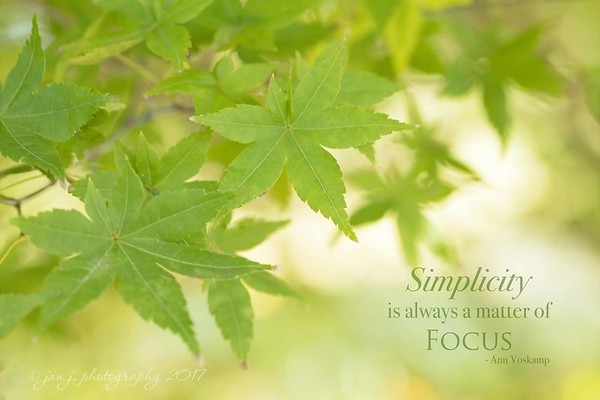 November 9 - I'm thankful for the simple things...<br /> <br /> #CY365 - Keep it Simple