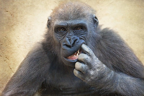 August 22 - As a former Dental Assistant I appreciate and am thankful for good dental hygiene...<br /> <br /> #CY365 - A Must Have<br /> San Diego Safari Park