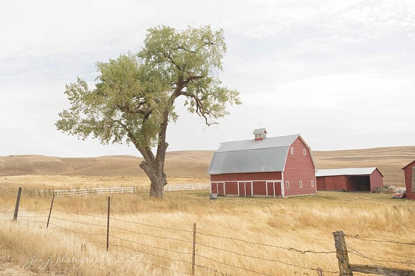 September 13 - A day spent driving through miles and miles of wheat fields.  I'm thankful for the folks that have made it their life's work caring for this land and preserving the history that goes with it.<br /> <br /> #CY365 - Well being<br /> The Palouse<br /> Washington State