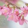 March 2 - I'm thankful to be seeing glimpses of Spring...<br /> <br /> #CY365 - Dr. Seuss<br /> #Focusing on Life - Hints of Spring