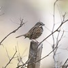 "February 12 - ""His eye is on the sparrow, and I know He watches me""...Thankful.<br /> <br /> #CY365 - Observed"