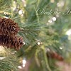 December 19 - Deck the Halls...<br /> I'm thankful today for a fun day of shooting.<br /> <br /> #CY365 - Special