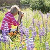 March 23 - I'm thankful for the CY365 community that gives me the opportunity to meet up with other photo-a-day friends/photographers who are just as happy as I am to spend hours in the flowers shooting...<br /> <br /> #CY365 - Potential<br /> Fullerton Arboretum<br /> Fullerton, CA