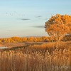 November 12 - I'm thankful for the Golden Hour...<br /> <br /> Bosque del Apache Wildlife Reserve<br /> San Antonio, NM