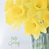 March 22 - I'm thankful for lunch dates with friends...<br /> <br /> #CY365 - Vibrant<br /> #Focusing on Life - Yellow