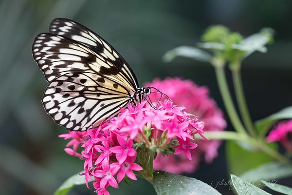March 16 - Each day I'm thankful for the little bits of beauty that I come across...<br /> <br /> Butterfly Jungle<br /> San Diego Safari Park<br /> San Diego, CA