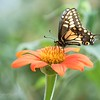 August 1 - I'm thankful for field trips...they brighten my day!<br /> <br /> #CY365 - Greenery<br /> Butterfly Farms<br /> Encinitas, CA