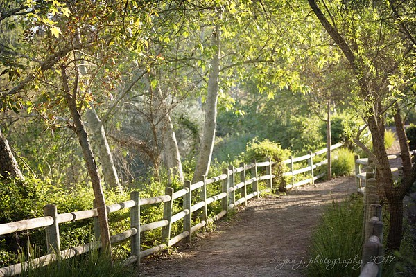 March 11 - I am very thankful that my husband is so patient, because when you go on a walk with me it's usually ten steps forward and three steps backward as I see something I want to shoot...<br /> <br /> #CY365 - Light Play<br /> Oso Creek Trail<br /> Mission Viejo, CA