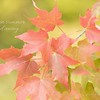 September 17 - I'm thankful to see the first few signs of Fall...