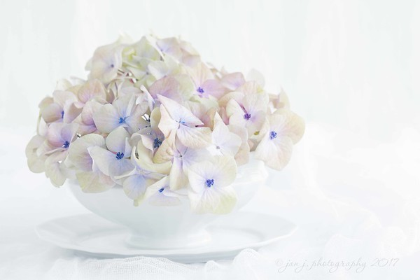 January 7 - I'm thankful for so many shades of color. Soft and subtle or bright and vibrant; all are gifts for my eyes...<br /> <br /> #CY365 - Minty White /High Key<br /> #inawhitebowl<br /> #softdreamyphotography