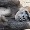 October 19 - I'm thankful that Friday is right around the corner...<br /> <br /> San Diego Safari Park