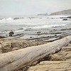 June 19 - It was a gray morning on the coast, but I was thankful for a long walk there with my favorite guy...<br /> <br /> #CY365 - Off Prompt<br /> Crystal Cove State Park<br /> Newport Beach, CA