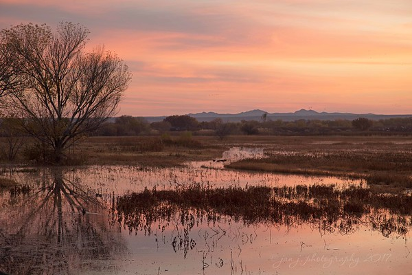 November 15 - Sunrise over North Pond...I'm thankful for beauty that brings tears to my eyes.<br /> <br /> Bosque del Apache Wildlife Reserve<br /> San Antonio, NM