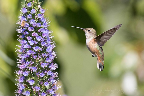 April 8 - I'm thankful for the birds and the bees...<br /> <br /> #CY365 - Angle<br /> Central Park<br /> Huntington Beach, CA