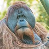 November 24 - Tired of turkey???<br /> I'm thankful for a day at the zoo.<br /> <br /> San Diego Zoo