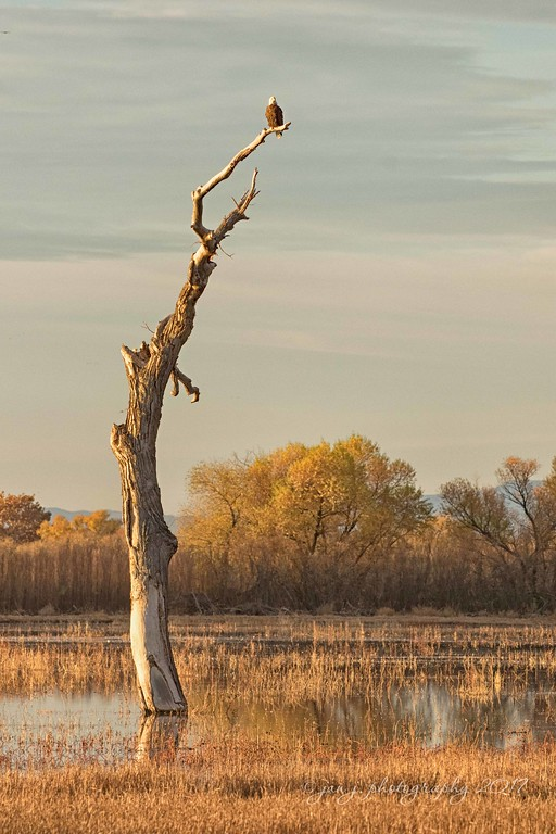 November 28 - I'm thankful for trees with 'character'...  #CY365 - Characteristic/Distinguishing Bosque del Apache, NM