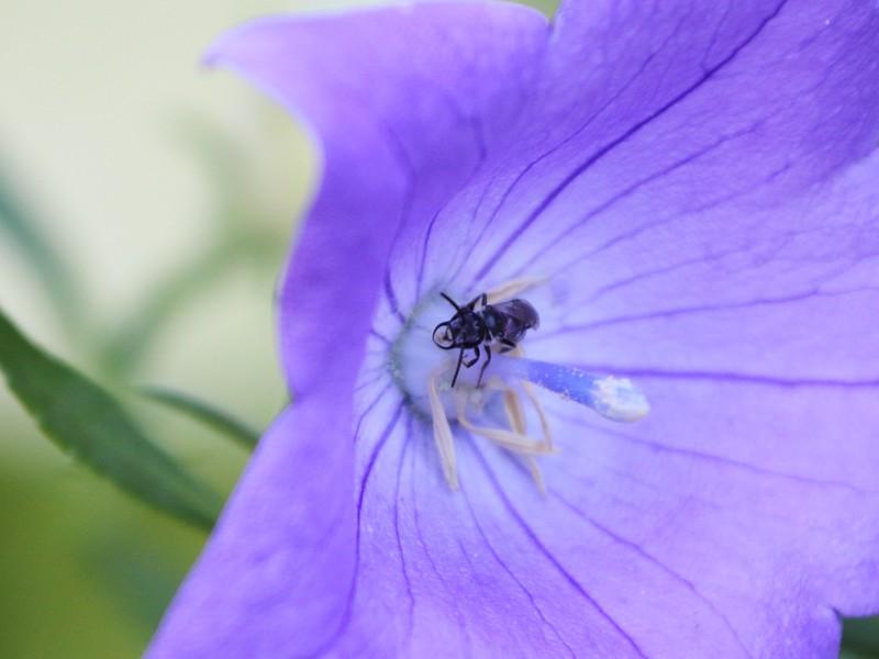 Day 599 - Shrinking Violet