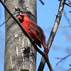 Day 488 - Cardinal Win