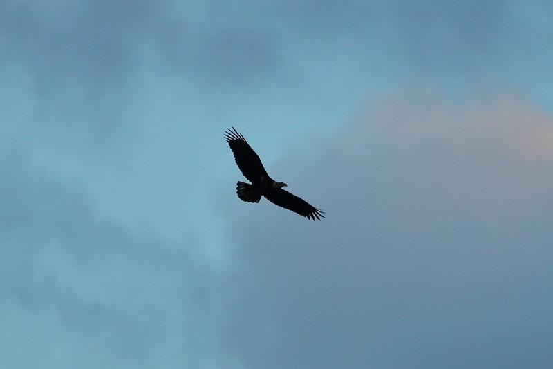 Day 104 - Twilight Eagle