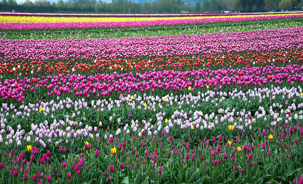 Rows of Colours